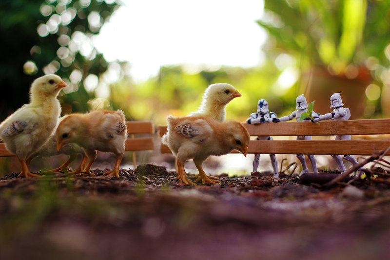 little_farm_by_zahirbatin-d77s5bf