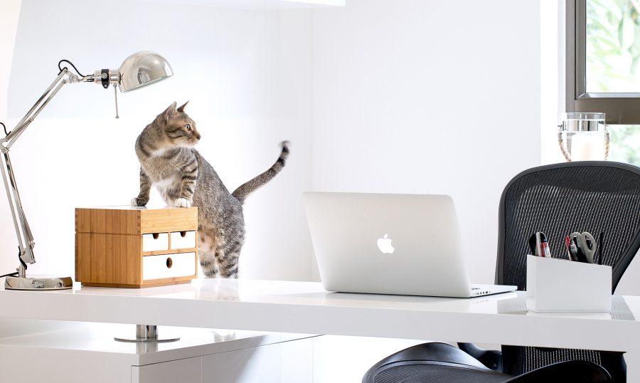 cat-kyotomoji-presentation-page