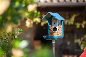 Bird Buddy Smart Bird Feeder